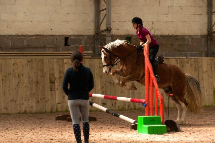 Cheston Farm Equestrian Centre Torquay A Local Guide